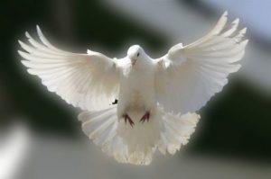 цена Московских голубей в тёплое время будет ниже в 2 раза